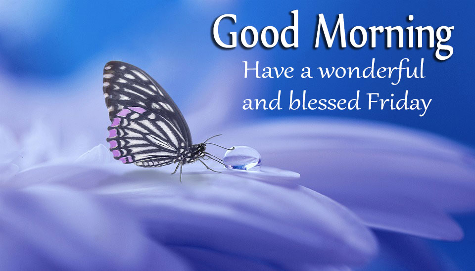 Good Morning Have A Wonderful And Blessed Friday Good Morning Images Quotes Wishes Messages Greetings Ecards
