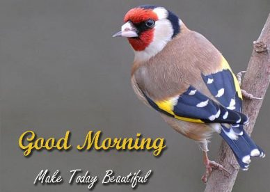 Good Morning Make Today Beautiful Images With Birds - Good Morning Images, Quotes, Wishes, Messages, greetings & eCards