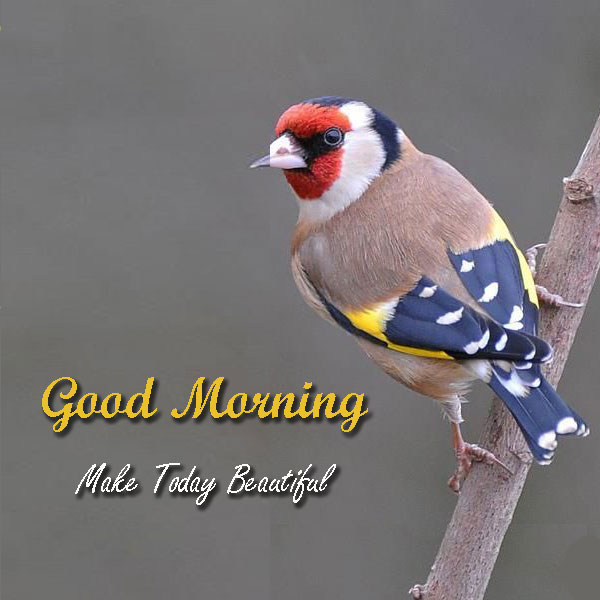 Good Morning Make Today Beautiful Images With Birds Good Morning Images Quotes Wishes Messages Greetings