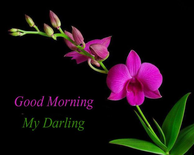 Good Morning My Darling Flowers Images - Good Morning Images, Quotes, Wishes, Messages, greetings & eCards