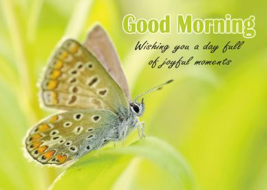 Good Morning Quotes Free Download - Good Morning Images, Quotes, Wishes, Messages, greetings & eCard