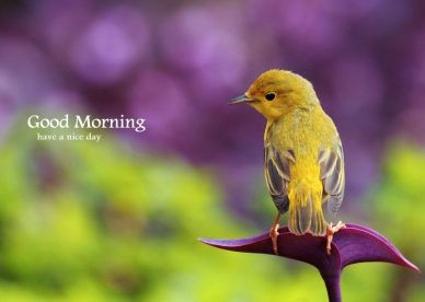 Good Morning Yellow Beautiful Bird Images - Good Morning Images, Quotes, Wishes, Messages, greetings & eCards