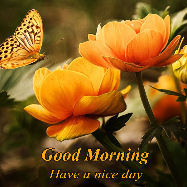 Good Morning Have A Nice Day Wishes With Rose Good Morning Images Quotes Wishes Messages Greetings