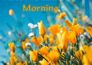 Have A Beautiful Morning Flowers Images - Good Morning Images, Quotes, Wishes, Messages, greetings & eCards