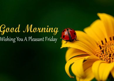 Wishing You A pleasant Friday Good Morning With Yellow Flowers - Good Morning Images, Quotes, Wishes, Messages, greetings & eCards