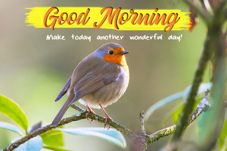Download Good Morning Wishes With Birds Images Good Morning Images Quotes Wishes Messages Greetings Ecards