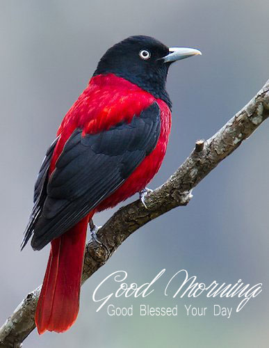 Good Morning God Blessed Your Day With Birds Images