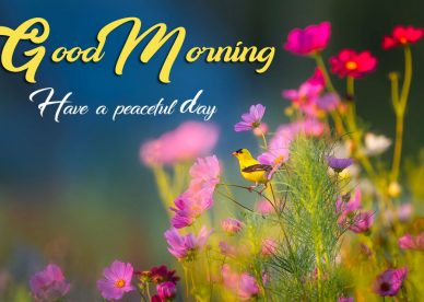 Good Morning Have A Peaceful Day - Good Morning Images, Quotes, Wishes, Messages, greetings & eCard