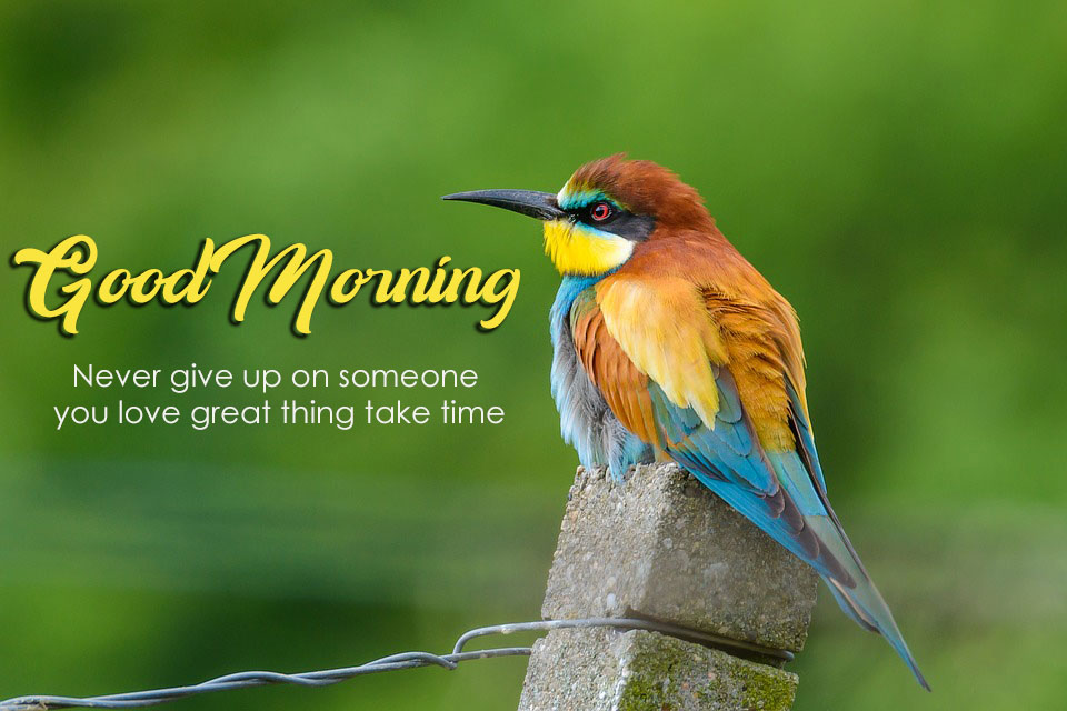Good Morning Love Birds Images Good Morning Images Quotes Wishes Messages Greetings Ecards