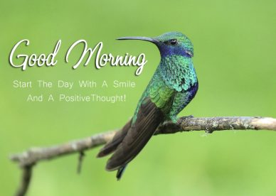 Good Morning Quotes Birds Images - Good Morning Images, Quotes, Wishes, Messages, greetings & eCard