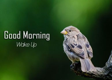 Good Morning Wake Up With Birds - Good Morning Images, Quotes, Wishes, Messages, greetings & eCard