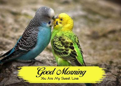 Good Morning You Are My Sweet Love - Good Morning Images, Quotes, Wishes, Messages, greetings & eCard