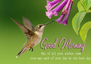Morning Wishes With Birds Images - Good Morning Images, Quotes, Wishes, Messages, greetings & eCard