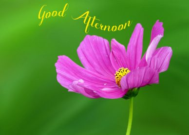 Good Afternoon Background - Good Morning Images, Quotes, Wishes, Messages, greetings & eCard Images