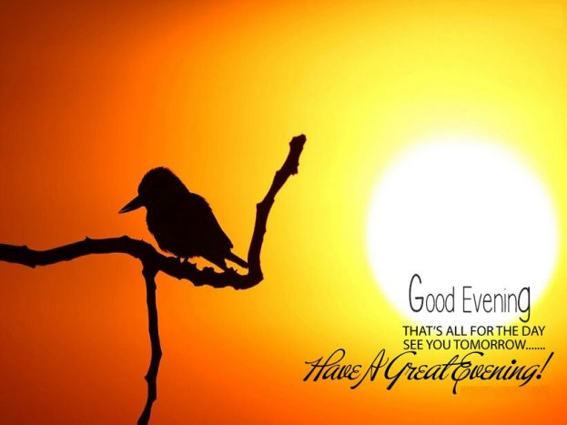 Good Evening Bird Background - Good Morning Images, Quotes, Wishes, Messages, greetings & eCard Images