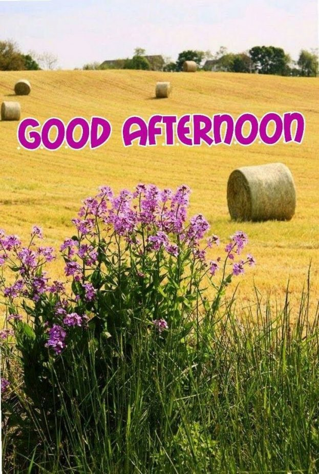 New Good Afternoon images - Good Morning Images, Quotes, Wishes, Messages, greetings & eCard Images