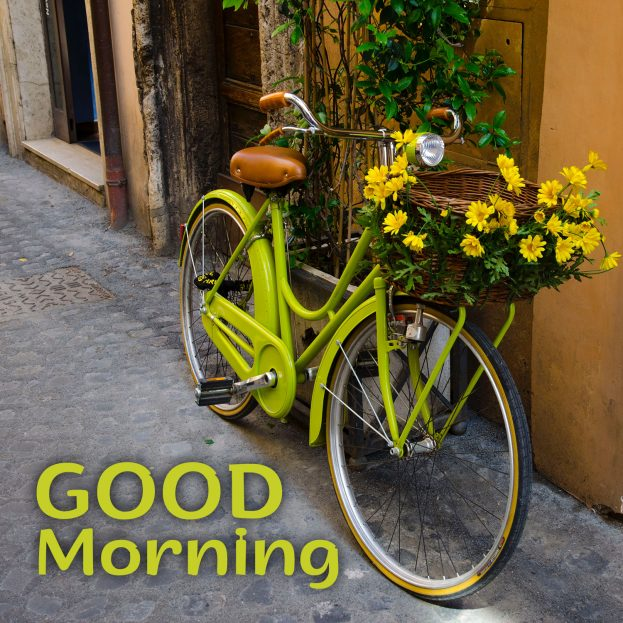 Beautiful flowers Images to share in the morning - Good Morning Images, Quotes, Wishes, Messages, greetings & eCard Images