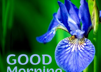 Beautiful morning with beautiful Good Morning flowers Images - Good Morning Images, Quotes, Wishes, Messages, greetings & eCard Images