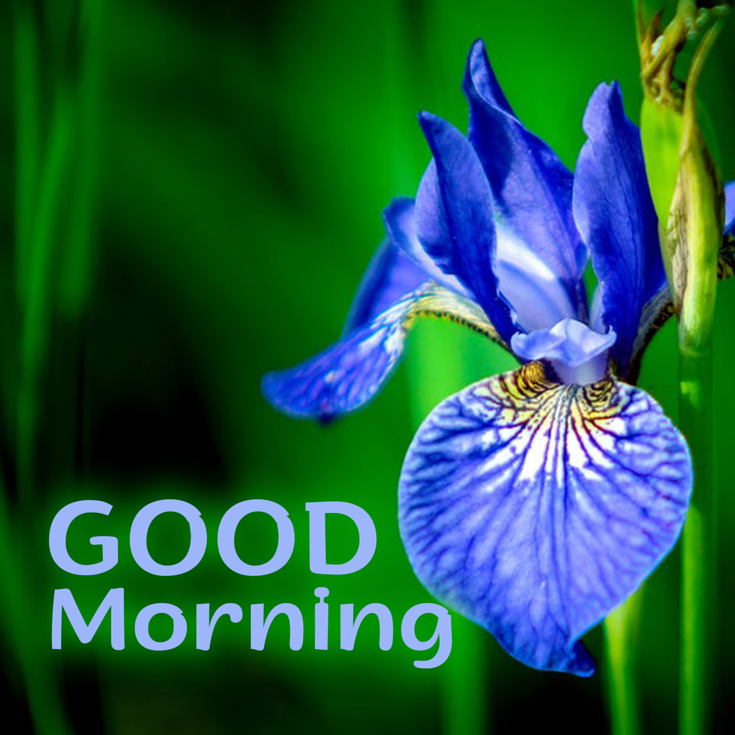 Beautiful Morning With Beautiful Good Morning Flowers Images Good Morning Images Quotes Wishes Messages Greetings Ecards