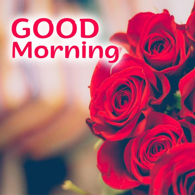 Best Good Morning flowers Images for IOS and Android - Good Morning Images, Quotes, Wishes, Messages, greetings & eCard Images
