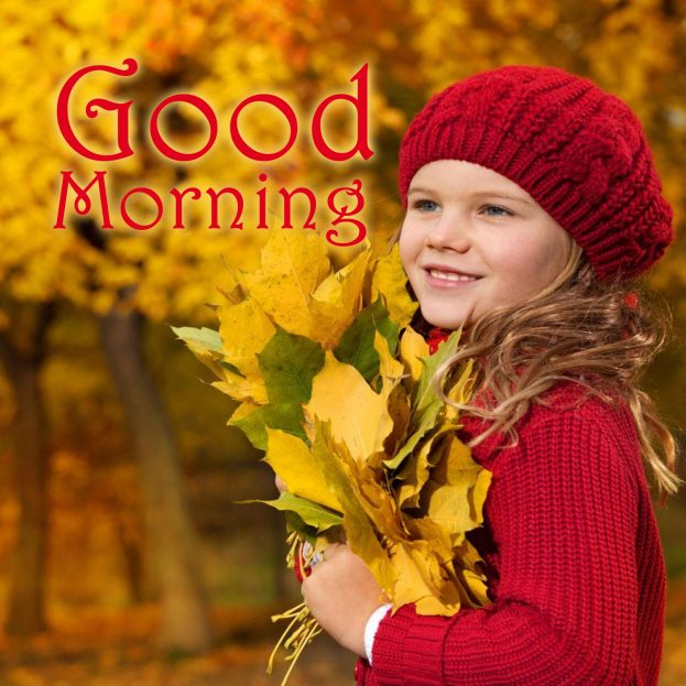 Best Good Morning flowers Images for Phones, Tablets and Desktops - Good Morning Images, Quotes, Wishes, Messages, greetings & eCard Images