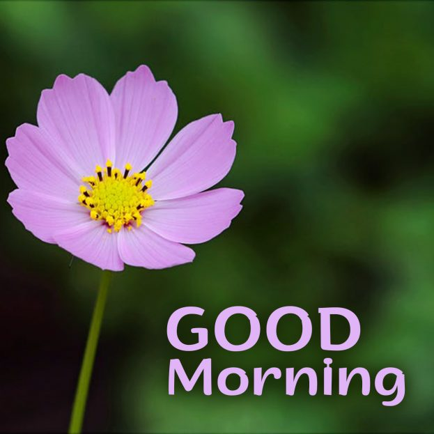 Brighten up the day of your friends with Good Morning flowers Images - Good Morning Images, Quotes, Wishes, Messages, greetings & eCard Images