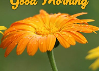 Download and share amazing Good Morning flowers Images - Good Morning Images, Quotes, Wishes, Messages, greetings & eCard Images