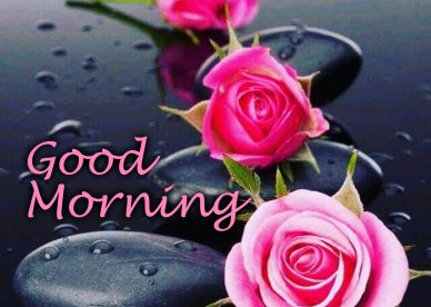 Download the images of the beautiful flowers Good Morning Images - Good Morning Images, Quotes, Wishes, Messages, greetings & eCard Images