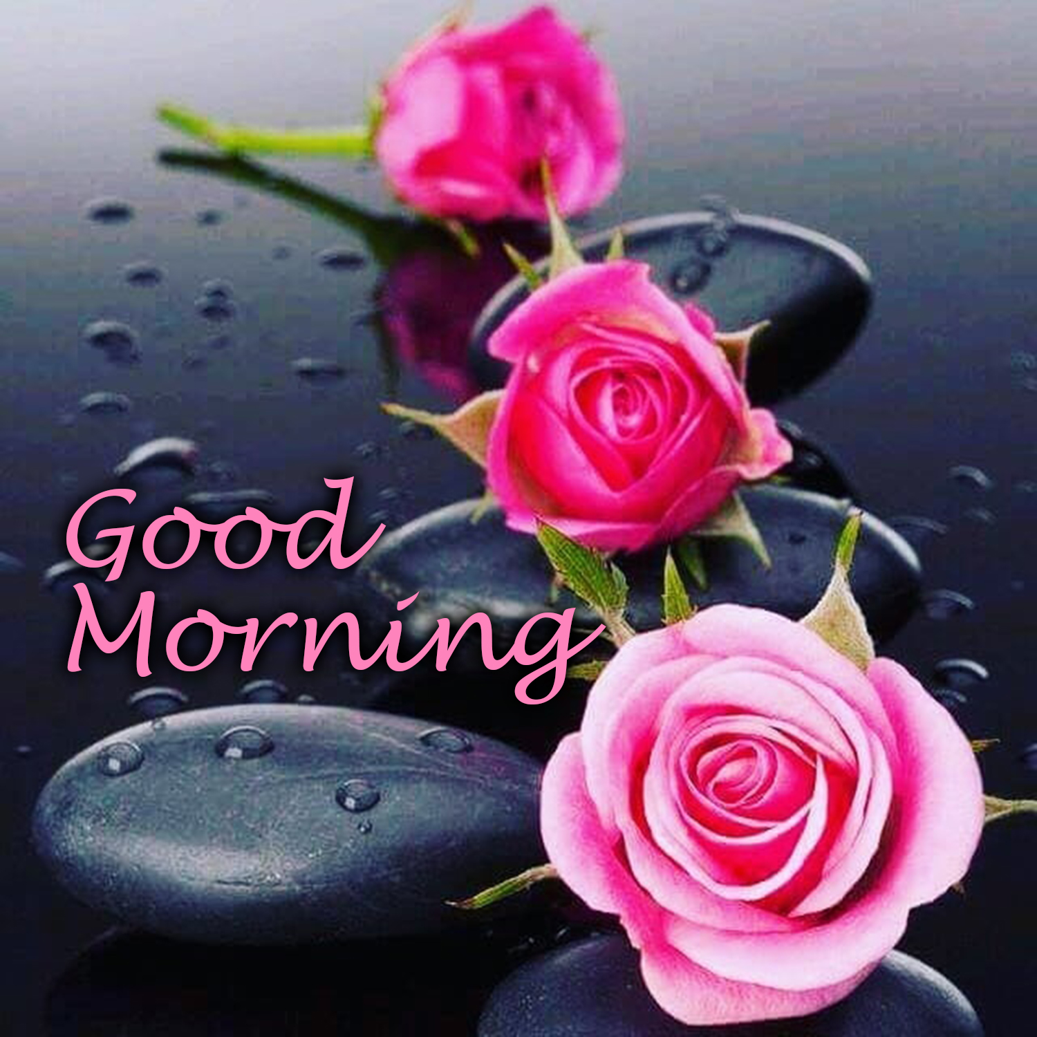 Download The Images Of The Beautiful Flowers Good Morning Images Good Morning Images Quotes Wishes Messages Greetings Ecards