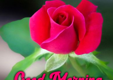 Easily Downloadable Good Morning love images - Good Morning Images, Quotes, Wishes, Messages, greetings & eCard Images