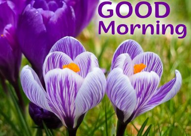 Free and Stunning Good Morning flowers Images for everyone - Good Morning Images, Quotes, Wishes, Messages, greetings & eCard Images