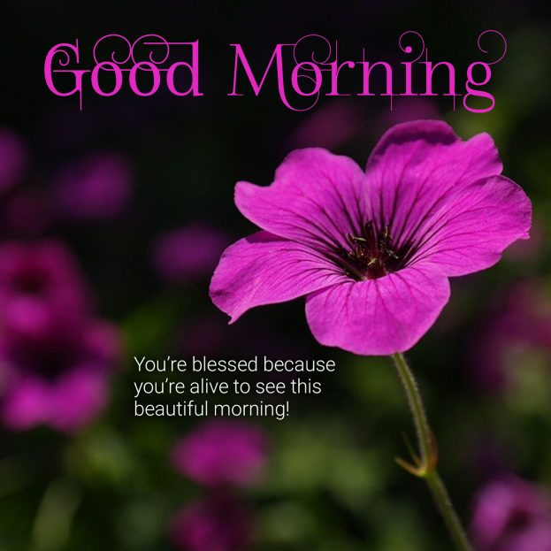 Free and easily shareable Good Morning Quotes Images - Good Morning Images, Quotes, Wishes, Messages, greetings & eCard Images