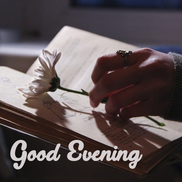Good Evening Images Flowers HD - Good Morning Images, Quotes, Wishes, Messages, greetings & eCard Images