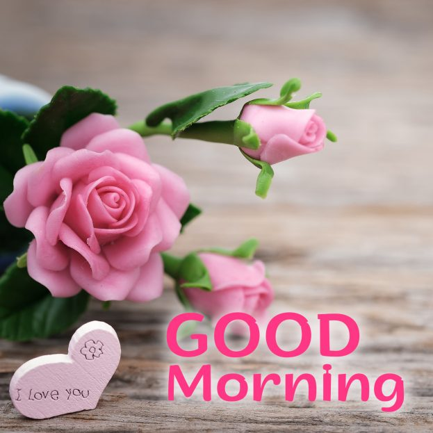 Good Morning Flowers Images for your Boyfriend and Girlfriend - Good Morning Images, Quotes, Wishes, Messages, greetings & eCard Images