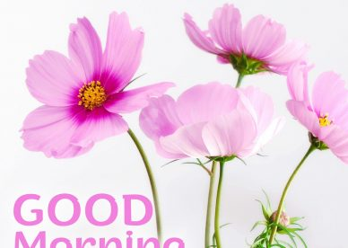 Make people happy by sending lovely Good Morning flowers Images - Good Morning Images, Quotes, Wishes, Messages, greetings & eCard Images