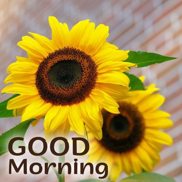 Send Good Morning Flowers Images with your sweetheart - Good Morning Images, Quotes, Wishes, Messages, greetings & eCard Images
