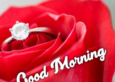 Send Gorgeous Good Morning flowers Images to your loved ones - Good Morning Images, Quotes, Wishes, Messages, greetings & eCard Images
