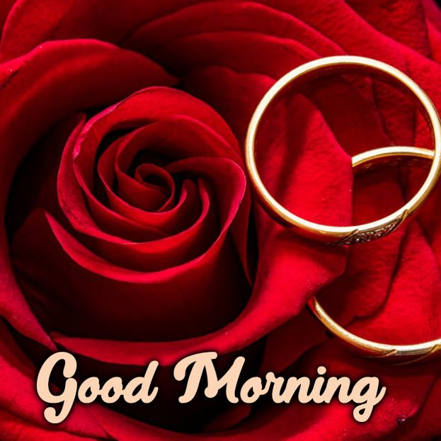 Share stunning Good Morning flowers Images with your partner - Good Morning Images, Quotes, Wishes, Messages, greetings & eCard Images