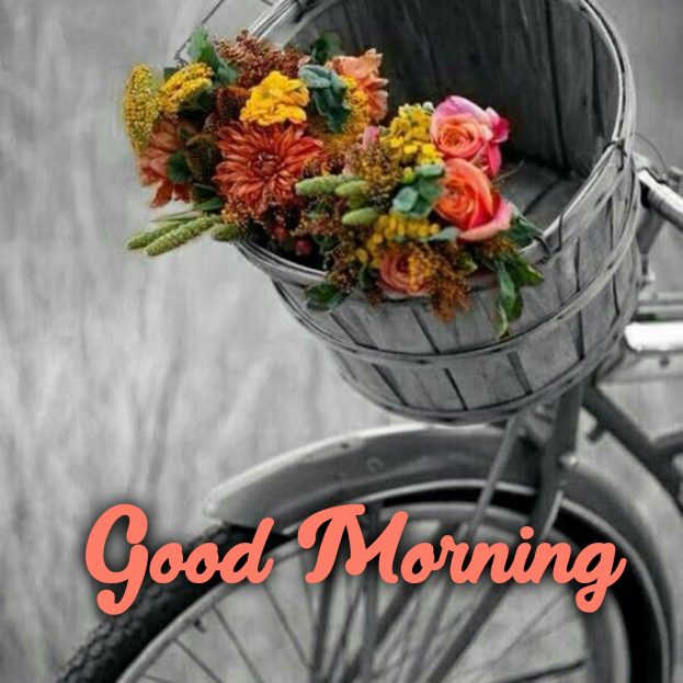 Spread love and joy by sending beautiful Good Morning flowers Images - Good Morning Images, Quotes, Wishes, Messages, greetings & eCard Images