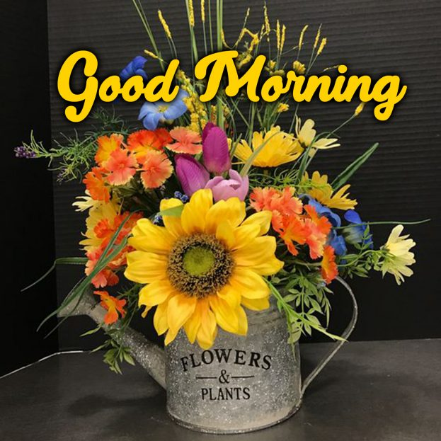 Start your lovely day with gorgeous Good Morning flowers Images - Good Morning Images, Quotes, Wishes, Messages, greetings & eCard Images