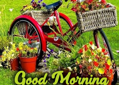 Use Good Morning flowers Images to appreciate your partner - Good Morning Images, Quotes, Wishes, Messages, greetings & eCard Images