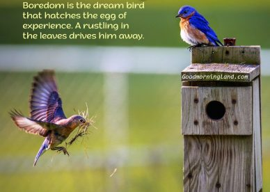 Amazing Good Morning Birds Images for friends and Family - Good Morning Images, Quotes, Wishes, Messages, greetings & eCard Images