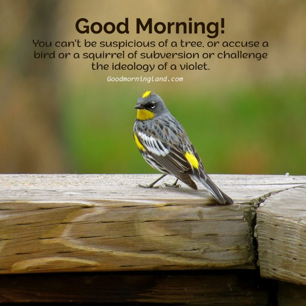 Amazing collection of Good Morning Birds Images and Quotes - Good Morning Images, Quotes, Wishes, Messages, greetings & eCard Images