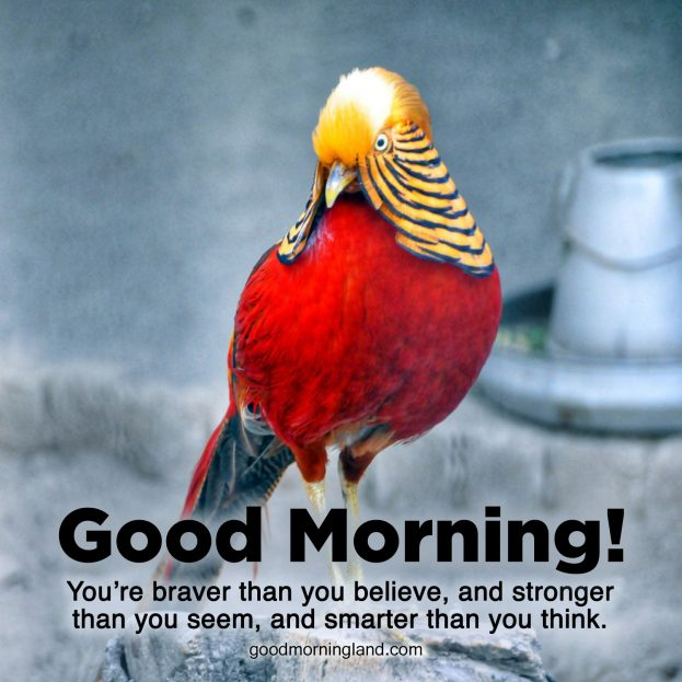 Appreciate your love by sending Good Morning message Images - Good Morning Images, Quotes, Wishes, Messages, greetings & eCard Images