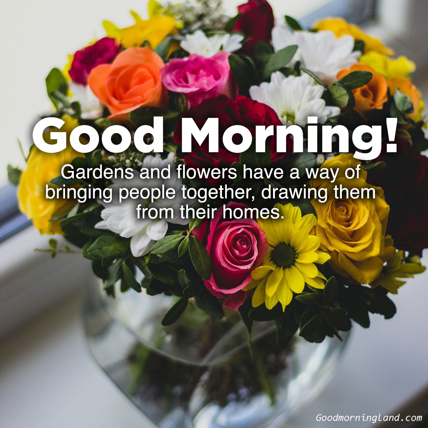 Beautiful And Amazing Good Morning Flowers With Images Good Morning Images Quotes Wishes Messages Greetings Ecards