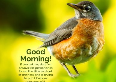 Best Good Morning Birds Images for you - Good Morning Images, Quotes, Wishes, Messages, greetings & eCard Images