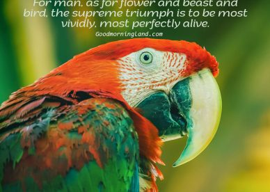 Best Good Morning Birds Images for you to share - Good Morning Images, Quotes, Wishes, Messages, greetings & eCard Images
