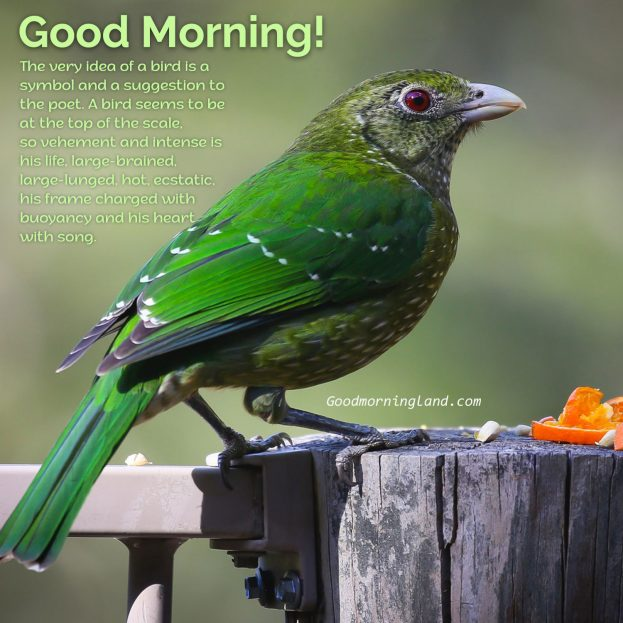Choose the best Good Morning Birds Images from our stock - Good Morning Images, Quotes, Wishes, Messages, greetings & eCard Images