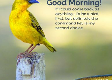 Collection of adorable Good Morning Birds Images for your partner - Good Morning Images, Quotes, Wishes, Messages, greetings & eCard Images