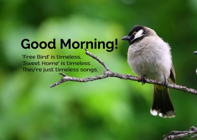 Collection of best Good Morning Birds Images for you - Good Morning Images, Quotes, Wishes, Messages, greetings & eCard Images